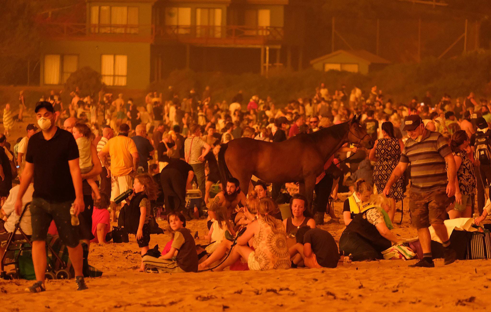 ©Alex Coppel: sur la plage de Malua Bay, personnes, chien et cheval évacué.es pour échapper aux feux.