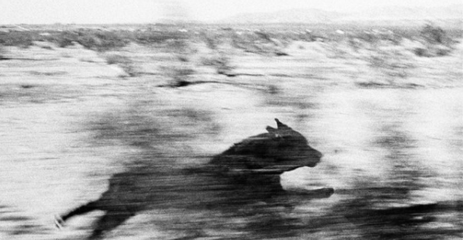 """Dogs Chasing My Car in the Desert"" (1996–98) © John Divola"