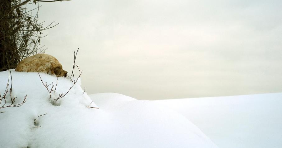 Photo : Laurence Loutre-Barbier